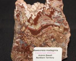 Stromatolitel, Madiganites mawsoni Australia GR28
