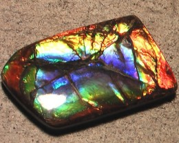 UNIQUE & AMAZING IN THE HAND NATURAL AMMOLITE GEM TOP PURPLE