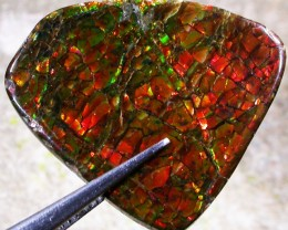 14.53 CTS CANADIAN AMMOLITE -POLISHED-  [ST7067]
