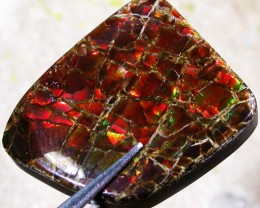 19.36 CTS CANADIAN AMMOLITE -POLISHED-  [ST7083]