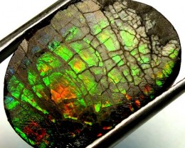 9.80  CTS CANADIAN AMMOLITE PREFINISHED    TBG-263