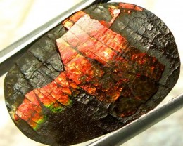 17.45  CTS CANADIAN AMMOLITE PREFINISHED  TBG-273