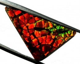 15.60 CTS  CANADIAN AMMOLITE CATHEDERAL PATTERN  TBG-320