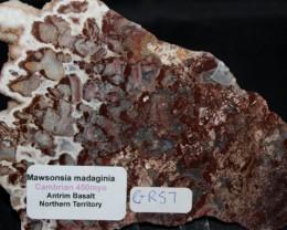 Madiganites mawsoni Stromatolite Slice, Australia (GR57)