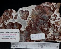 Stromatolite Madiganites mawsoni Australia (GR60)