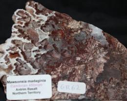 Stromatolite Madiganites mawsoni slice, Australia. (GR62)