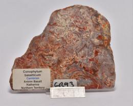 Stromatolite Conophytom basalticum slab, Australia (GR93)