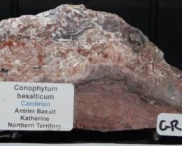 Stromatolite Conophytom basalticum slab, Australia (GR94)