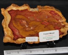 Fossil Wood Slice, Jurassic, QLD, Australia (GR117)