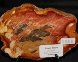 Fossil Wood Slice, Jurassic, QLD, Australia (GR118)