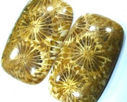 CORAL INDONESIA  27.90 CTS  TBG-349