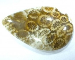 CORAL INDONESIA  19.40 CTS  TBG-353