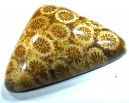 CORAL INDONESIA  32.55 CTS  TBG-360