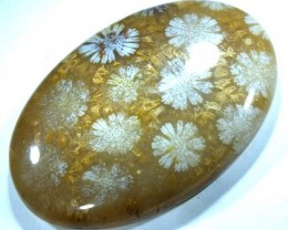 CORAL INDONESIA  50 CTS  TBG-362