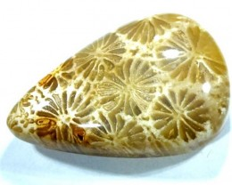 CORAL INDONESIA  36.30 CTS  TBG-366