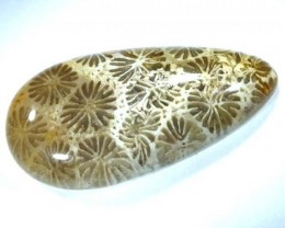 CORAL INDONESIA  57.10 CTS  TBG-371