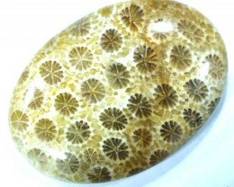 CORAL INDONESIA  34.70 CTS  TBG-372