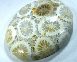 CORAL INDONESIA  11.70 CTS  TBG-410