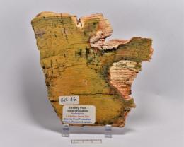 Strelley Pool Stromatolite Slice 3.4 byo Australia (GR186)