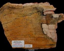 Strelley Pool Stromatolite Slice 3.4 byo Australia (GR188)