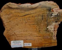 Strelley Pool Stromatolite Slice 3.4 byo Australia (GR190)