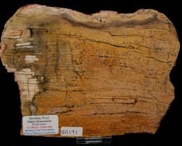 Strelley Pool Stromatolite Slice 3.4 byo Australia (GR191)