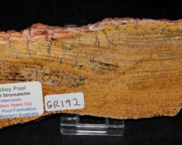 Strelley Pool Stromatolite Slice 3.4 byo Australia (GR192)