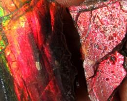 35 cts  3 pcs Ammolite Rough Speciemn MYGM 1446