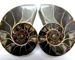 0.400 ILARGE   MADAGASCAR  AMMONITE   SPLIT GG1463