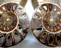 0.419  LARGE   MADAGASCAR  AMMONITE   SPLIT GG1464