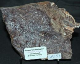 STROMATOLITE Mawsonia madaginia, Australia (GR252)