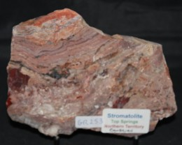 Stromatolite Polished Slice, Top Springs, Australia (GR253)
