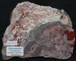 Stromatolite Polished Slice, Top Springs, Australia (GR259)