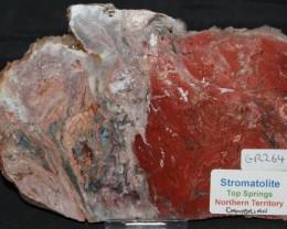Stromatolite Polished Slice, Top Springs, Australia (GR264)