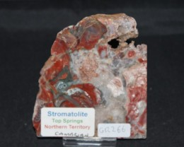 Stromatolite Polished Slice, Top Springs, Australia (GR266)