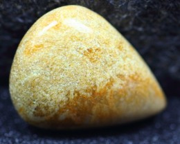 27.60ct Natural Coral Fossil CABOCHON STONE F05