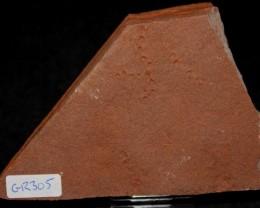 RARE HORODYSKIA EDIACARAN AUSTRALIAN FOSSIL (GR305)