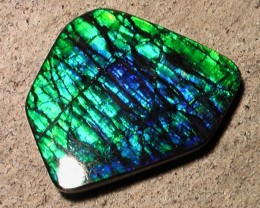 AWESOME 'TOP GEM' NATURAL AMMOLITE GEM EXCELLENT CRISP COLOR
