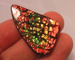 EXCELLENT 'FLASHY' COLOR NATURAL AMMOLITE GEM 'BIG' rare pinks