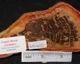 Fossil Wood Slice, Jurassic, QLD, Australia (GR400)