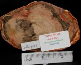 Fossil Wood Slice, Jurassic, QLD, Australia (GR401)