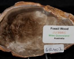 Fossil Wood Slice, Jurassic, QLD, Australia (GR402)