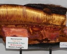 Marramamba Tiger Eye Slice Stromatolite Australia (GR414)