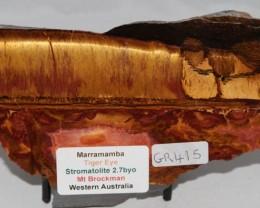 Marramamba Tiger Eye Slice Stromatolite, Australia (GR415)