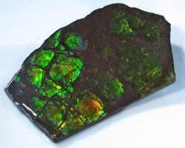 8.83 CTS AMMOLITE  ROUGH SPECIMEN FROM CANADA [F4718]