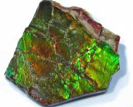 9.41 CTS AMMOLITE  ROUGH SPECIMEN FROM CANADA [F4743]