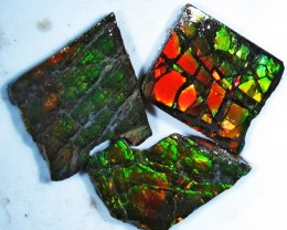 22.46 CTS AMMOLITE  ROUGH PARCEL SPECIMEN FROM CANADA  F4764