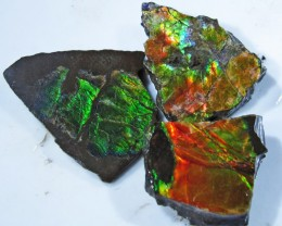 34.08 CTS AMMOLITE  ROUGH PARCEL SPECIMEN FROM CANADA  F4766