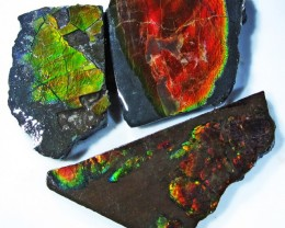 46.57 CTS AMMOLITE  ROUGH PARCEL SPECIMEN FROM CANADA  F4772