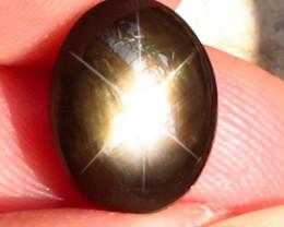 9.05 Carat Thailand Black Star Sapphire - Gorgeous Gem